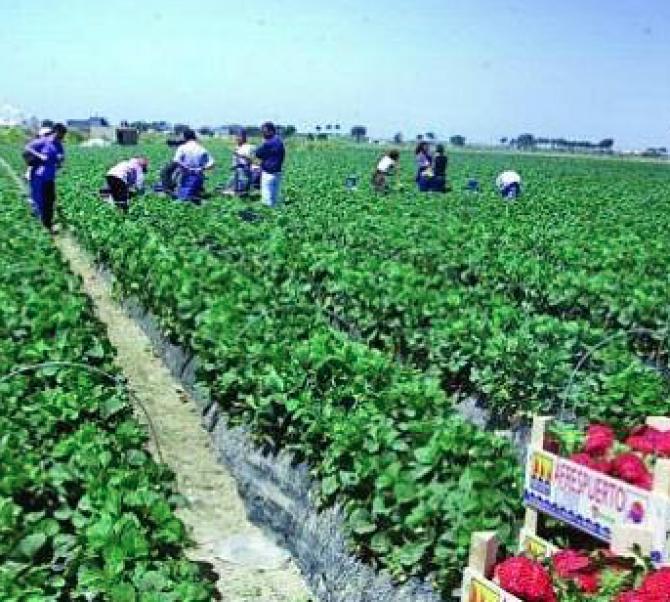 Italia, agricultură