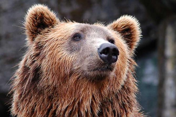 Un alt bărbat din Prahova, sfâșiat de urs