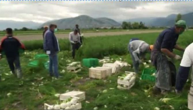 agricultura_italia