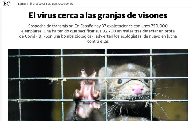 focar virus vizoni nurca