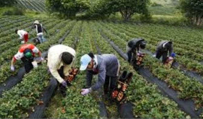 munca_agricola