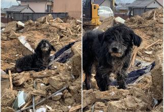Un câine a păzit gospodăria deși stăpânii au murit în urmă cu trei ani (Foto: FB/Casa lui Patrocle)