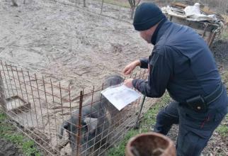 Fermă de porci ilegală. Sursa foto: centropagina.it