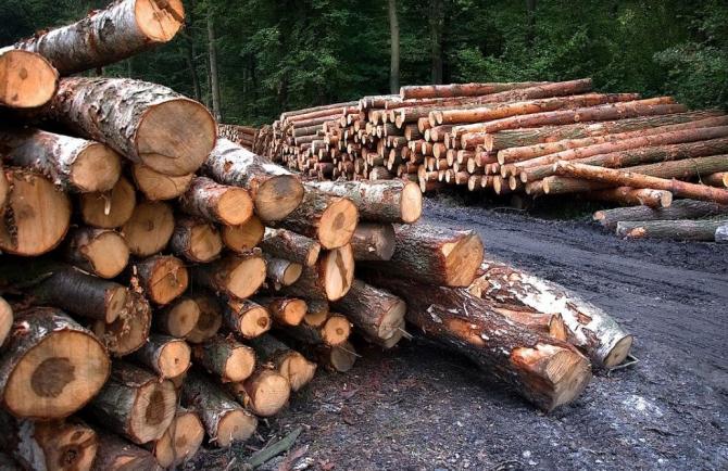 padurar batut lemne