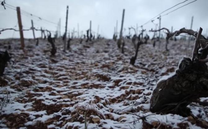 Franta inghetul a compromis recolta de struguri caise si mere