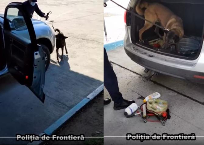 Momentul in care un câine politist de frontiera a descoperit mii de tigari ascunse intr-o masina