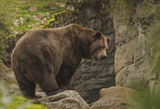 De ce s-a aflat abia în mai de uciderea ursului Arthur, dacă el a fost împușcat în martie