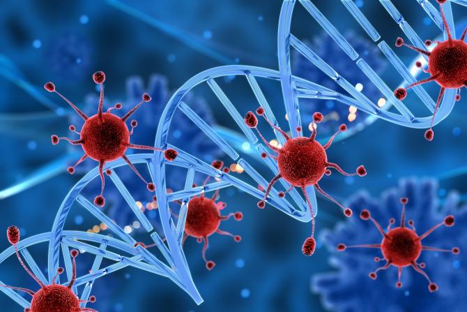 Cercetătorii au descoperit un nou tip de coronavirus de origine canină