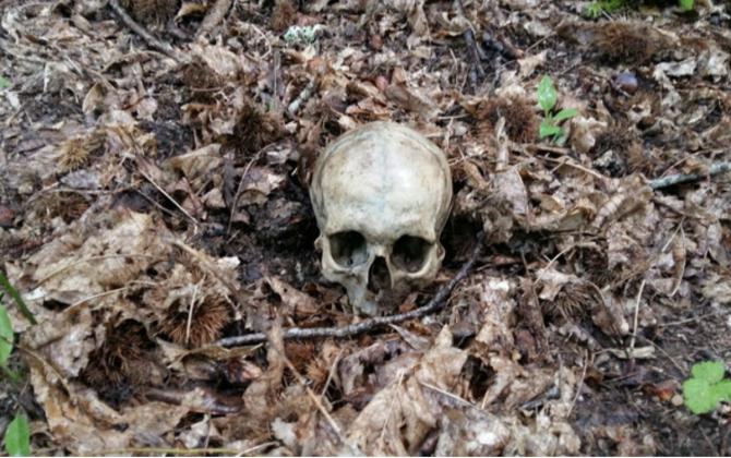 Craniul găsit în pădurea din Montemignaio care s-a dovedit a aparține unui român (Sursa foto: corrierediarezzo.corr.it)