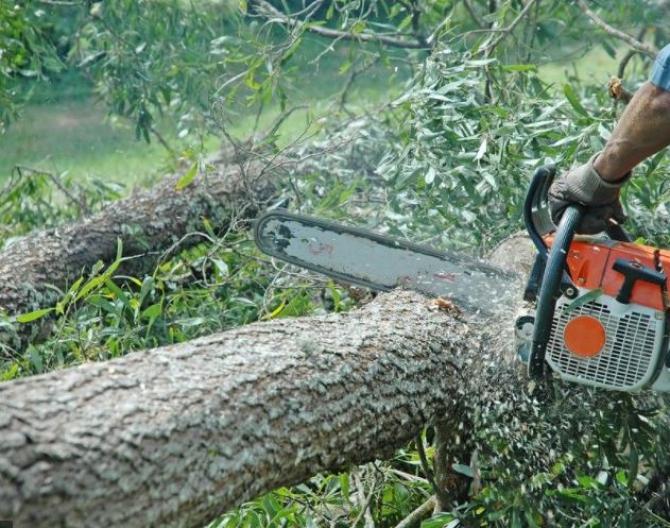 Muncitor strivit de un copac, într-o exploatare forestieră din Prahova. Bărbatul a murit pe loc