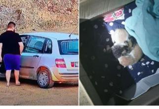 Român, amendat pentru că a abandonat patru pui de pisică pe un câmp Sursa - ziuadevest.ro