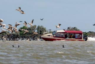 Românul care a intrat cu barca într-o colonie de pelicani, în Delta Dunării, s-a ales cu dosar penal sursa facebook/marian strinoiu
