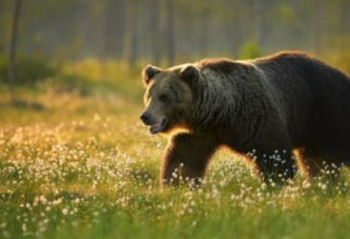 Un bărbat din Sălaj a stat mai multe ore într-un copac de teama unui urs