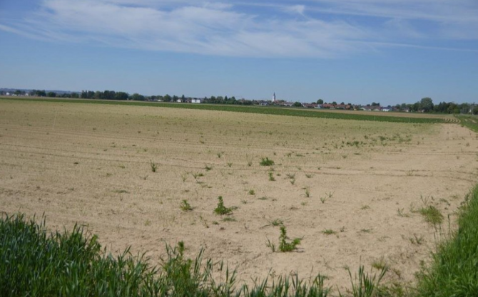 Câmpul din Germania unde a fost găsit cadavrul românului (Sursa foto: pnp.de)