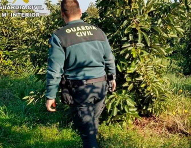 Spania. Trei români, acuzați că au furat sute de kilograme de avocado, în valoare de 2000 de euro
