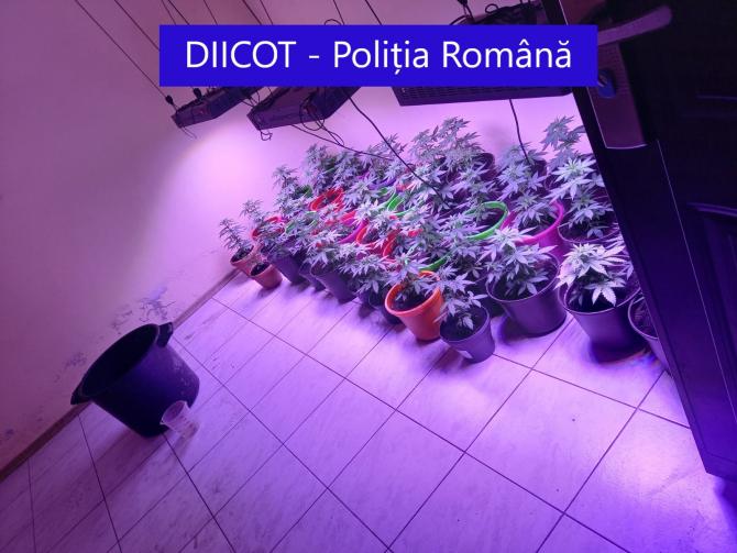 2. -imagine fara descriere- (cannabis-indoor.jpg)
