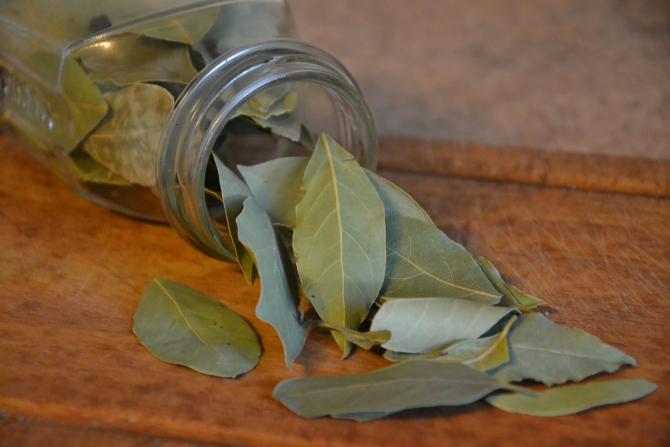 Ceai de dafin, multiple beneficii pentru sănătate. Se face simplu și rapid!
