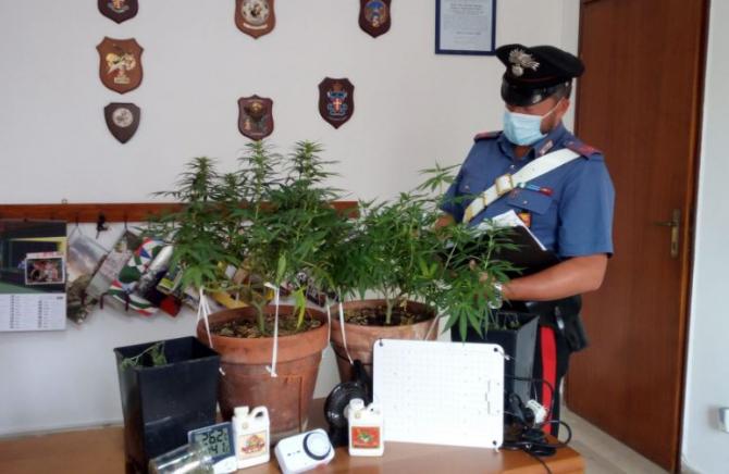 Italia. Un român care cultivă cânepă indiană acasă, săltat de carabinieri