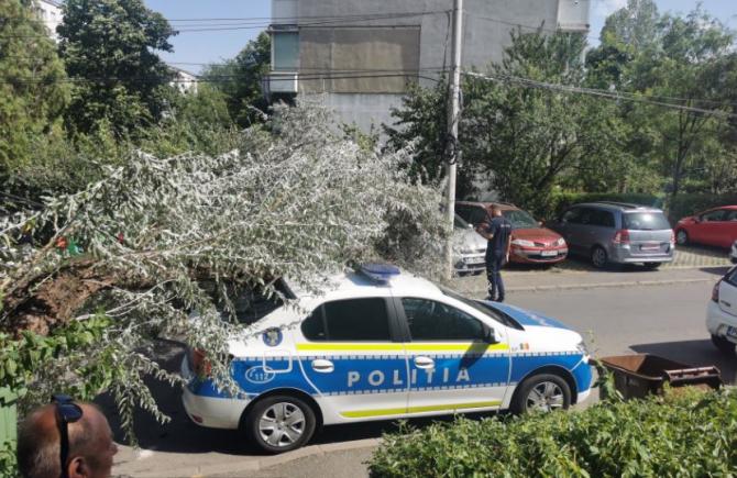 Maşină de poliţie, strivită de un copac. Un polițist, care era în automobil, la un pas de a fi rănit Sursa - observatorulph.ro