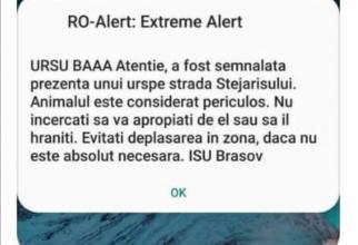 RO-Alert a semnalat haios prezența unui urs în Brașov