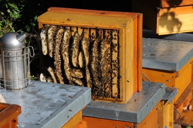 Primul hotel pentru albine se află în Croația