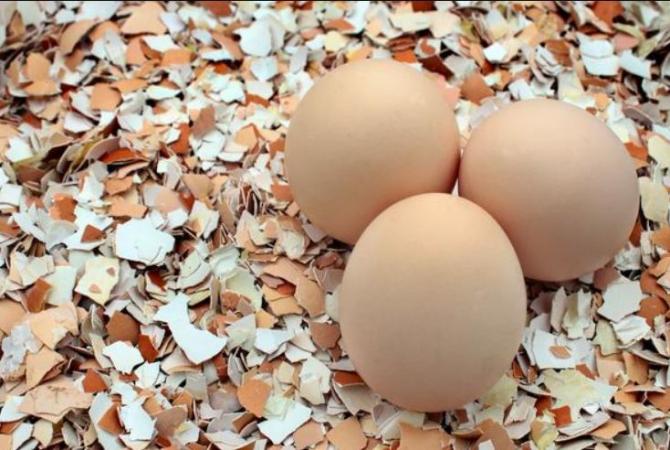 Nu mai aruncați cojile de ouă. Motivele geniale pentru care ar trebui să le folosiți în grădina