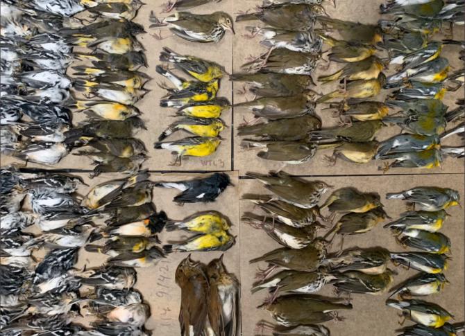 Imaginea cu sutele de păsări moarte în New York (sursa: Twitter)