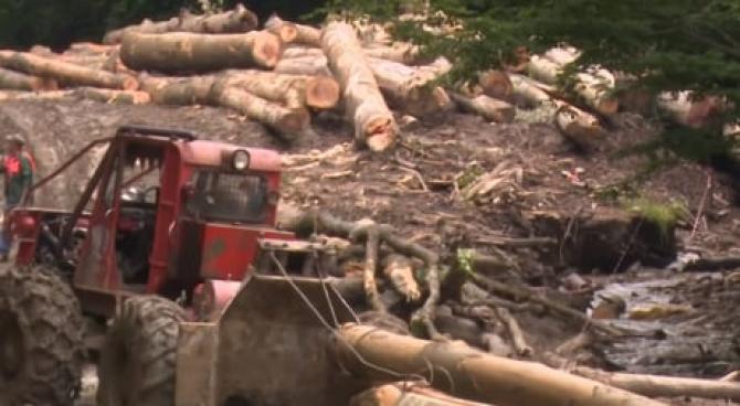 Un tânăr român, de 24 de ani, prins sub un utilaj forestier, într-o pădure
