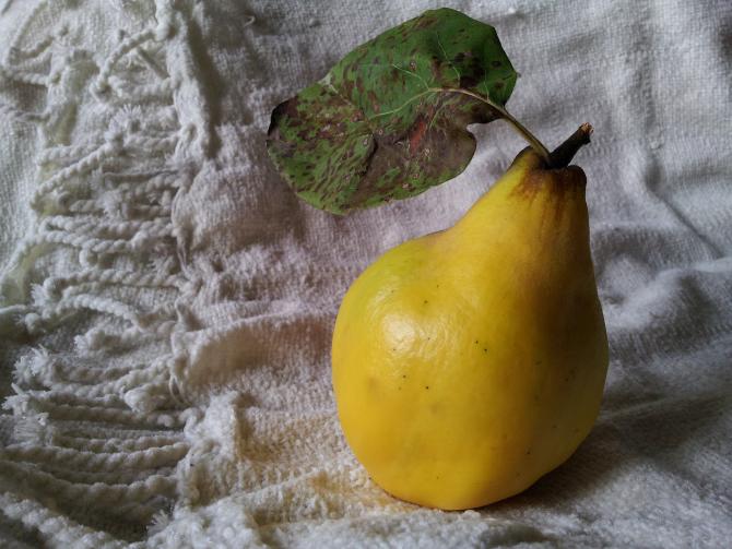 Gutuia, darul minune al toamnei: Rețeta celui mai bun remediu contra tusei, aflat de la bunica